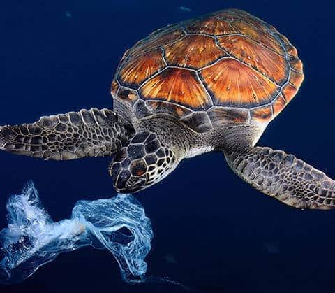 SEAQUAL, la fibre polyester qui depollue les oceans_textileaddict