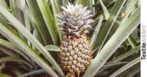 ananas fibre_TextileAddict